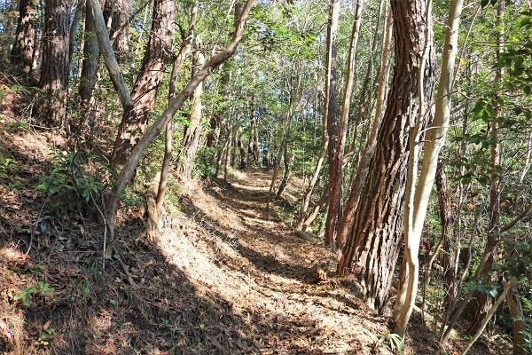 平成の山登山道