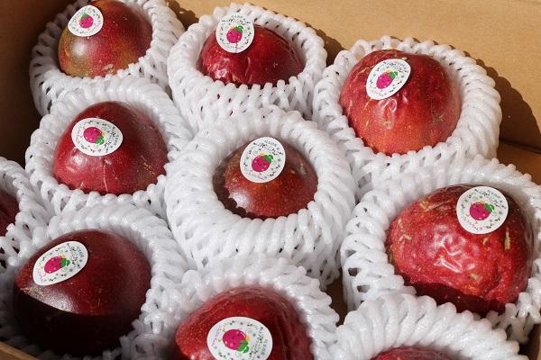 果実の収穫は8月中旬以降を予定