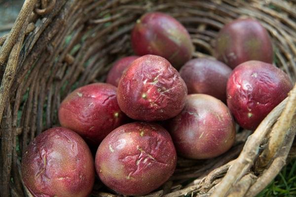 パッションフルーツの果実