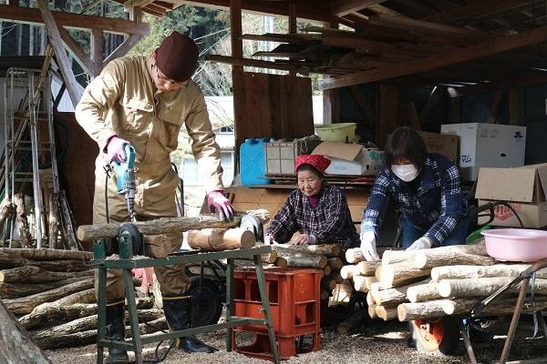 原木しいたけの菌打ち作業